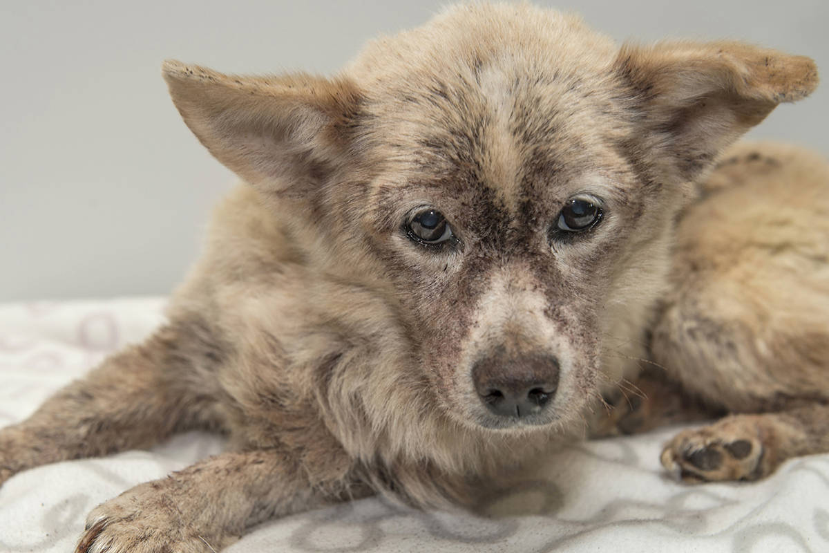 Dog with 10,000 fleas now thriving