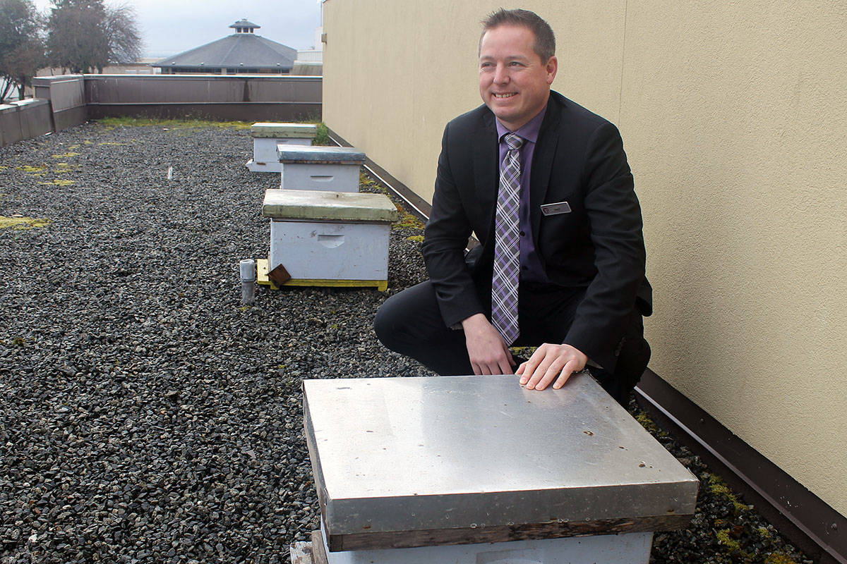 Daryl West, general manager of the Coast Bastion Hotel, shows four of six hives that are housing the hotel's new guests – 60,000 New Zealand honeybees. The hotel is hosting the honeybees as part of a larger efforts around environmental stewardship. TAMARA CUNNINGHAM/News Bulletin