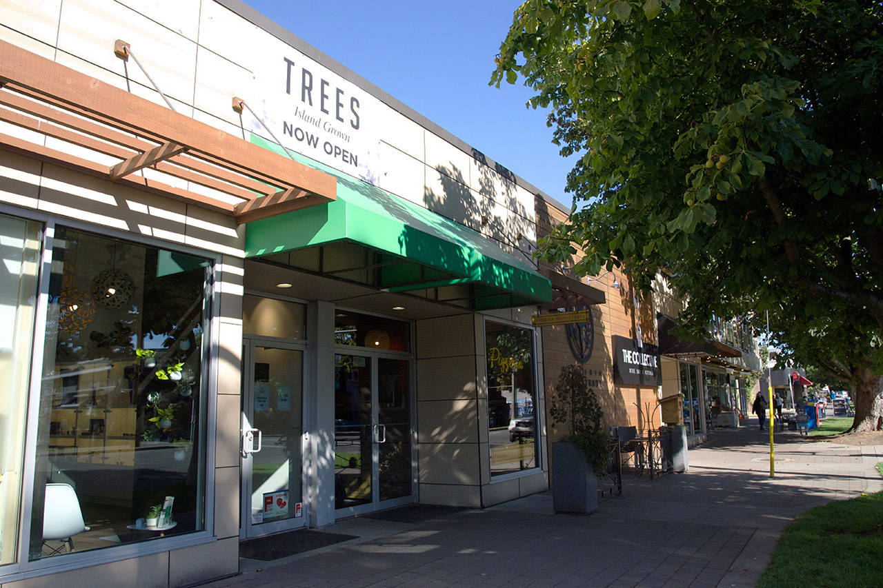 Trees opened their fifth location on August 30. Three weeks up, and another three weeks more until cannabis is legalized, the store is about to submit their provincial licensing application and prepare for significant change. (Nicole Crescenzi/News Staff)