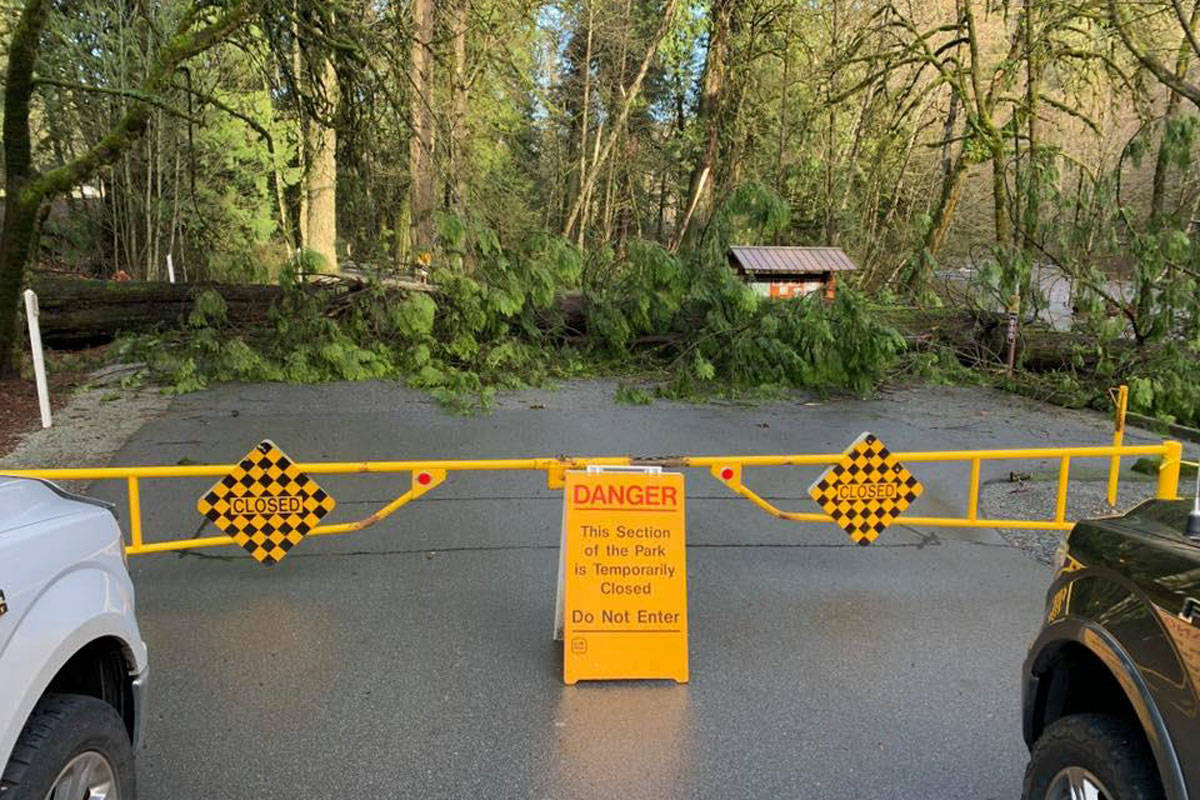 Goldstream Provincial Park flooded on Saturday and trails are still closed as of Tuesday due to destabilized trees. (Facebook/The Goldstream Nature House)