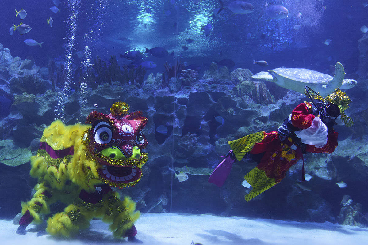 Divers perform an underwater lion dance at the KLCC Aquaria during Chinese Lunar New Year celebrations in Kuala Lumpur, Friday, Feb. 12, 2021. (AP Photo/Vincent Thian)
