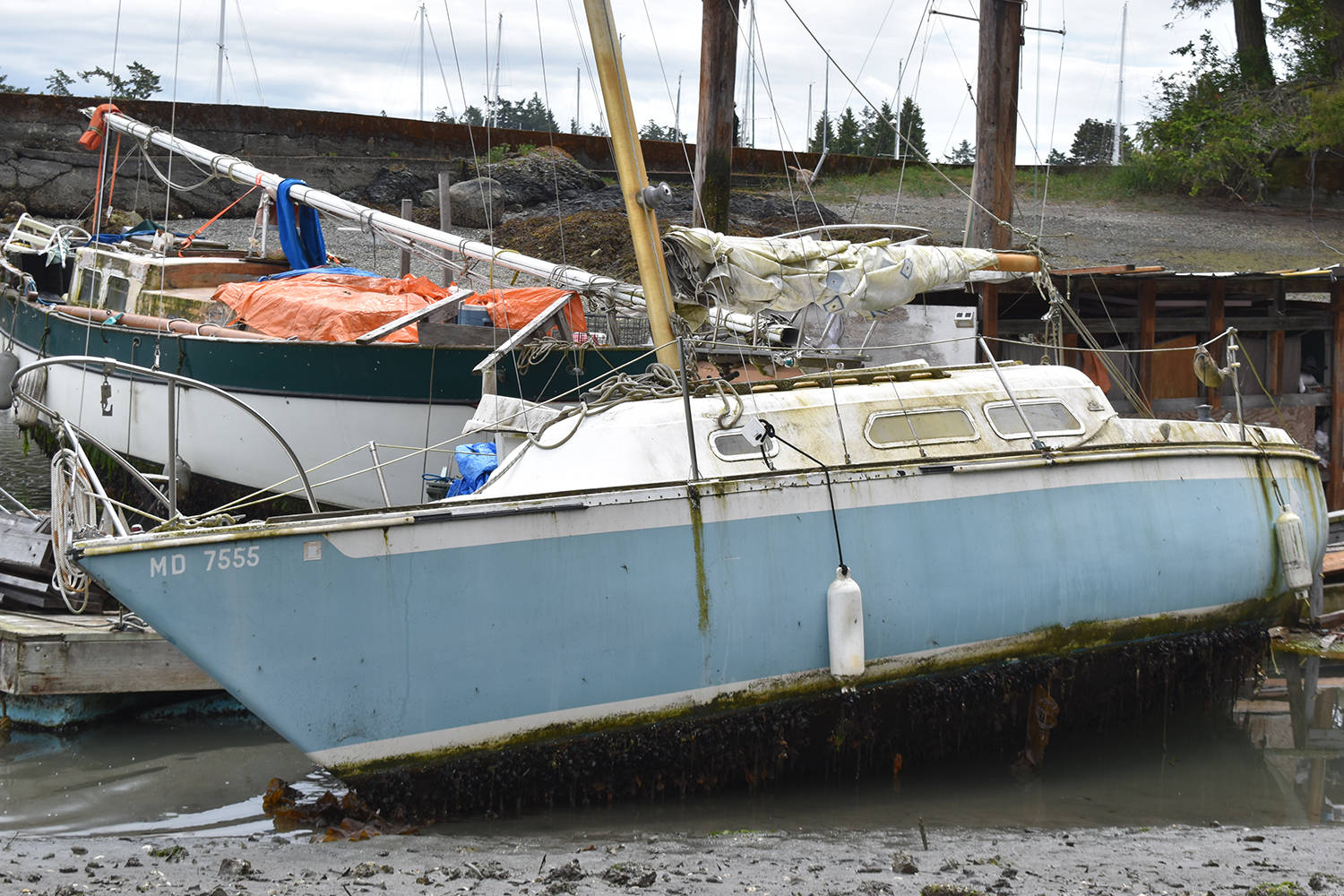 Several boats in violation of a North Saanich order remain moored off Lillian Hoffar Park almost two months month after the municipality had told them to sail off. (Wolf Depner/News Staff)