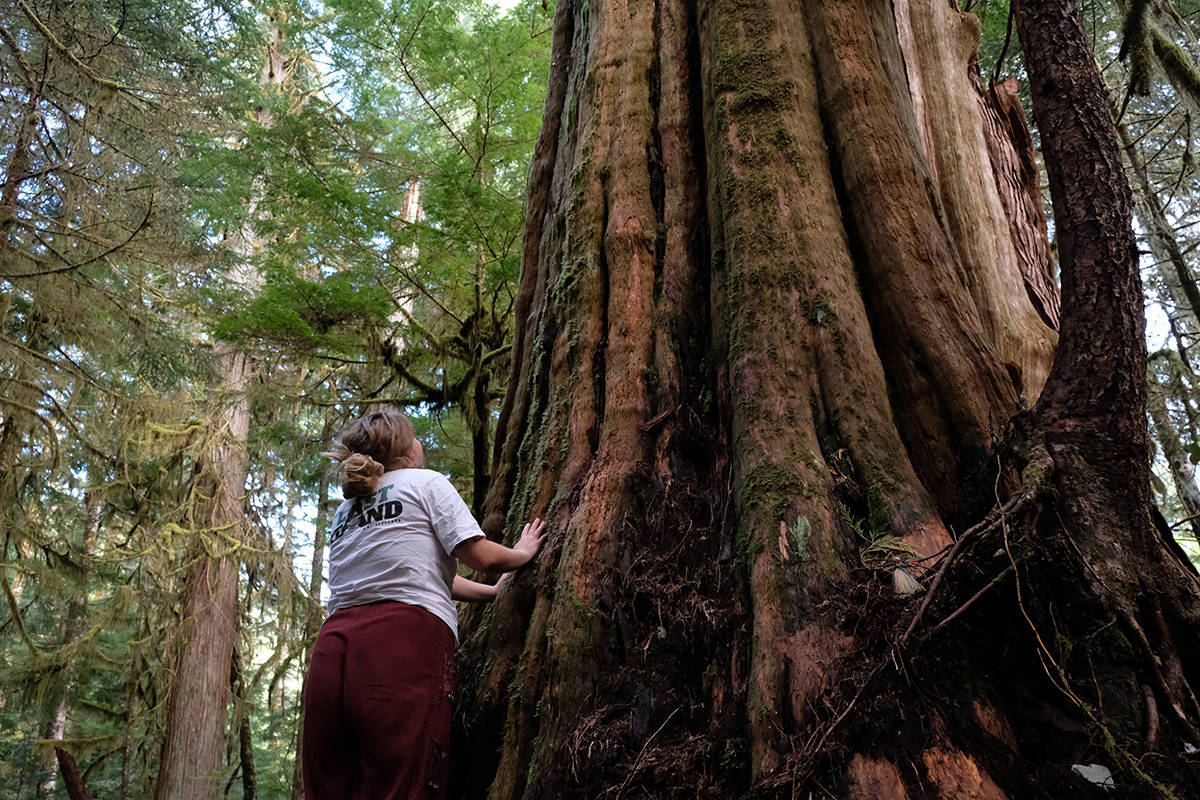 Shail Wolf admires the ancient tree the protesters have dubbed the grandmother. (Zoe Ducklow/News Staff)
