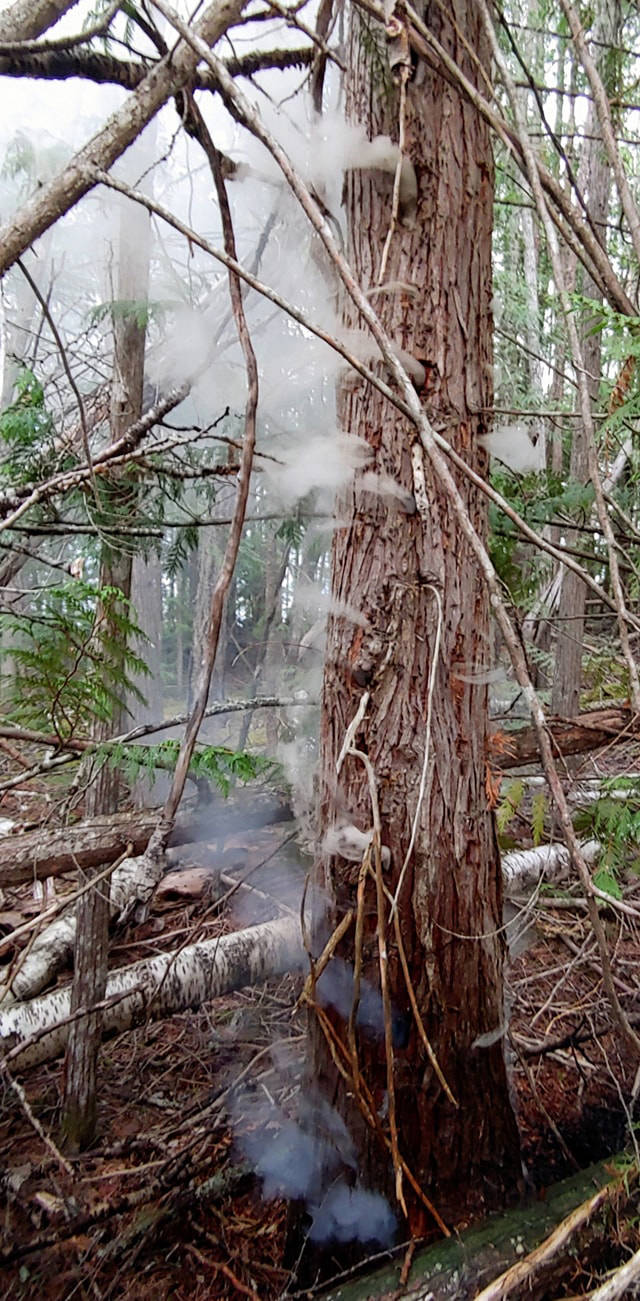 Craig Luke was afraid he was going to lose the battle when he spotted smoke pouring out from this tree. Photo: Craig Luke