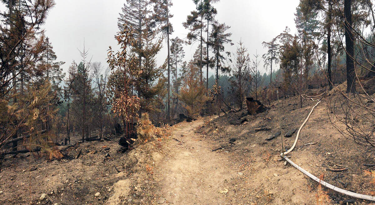 Area of Maple Mountain burned by the 2018 wildfire. (Photo by the Municipality of North Cowichan)